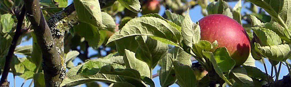 BRUCKER LAND Apfelsammlung